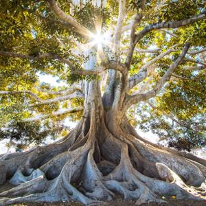 arbre grand développement personnel
