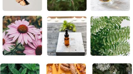 Les plantes médicinales pour affronter l'hiver