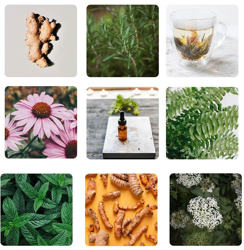 visuel de plantes medicinales